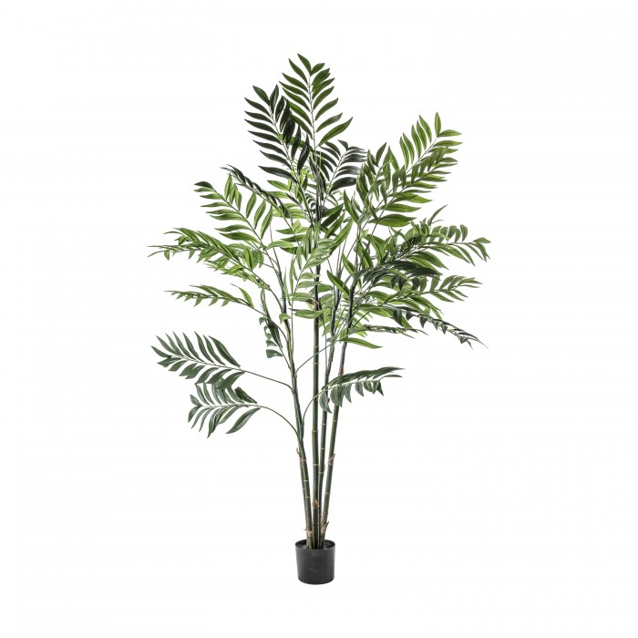 Areca Palm Tree Large