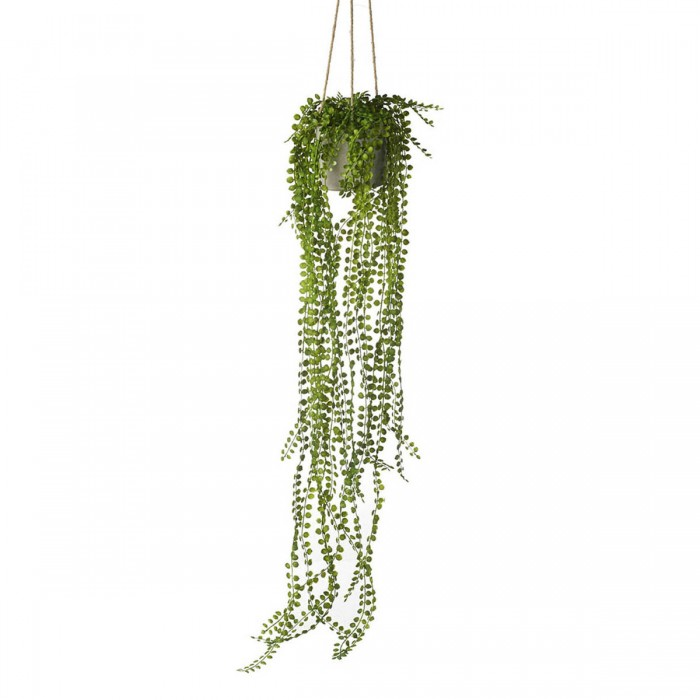Potted Hanging Pearl Spray Green (3pk)
