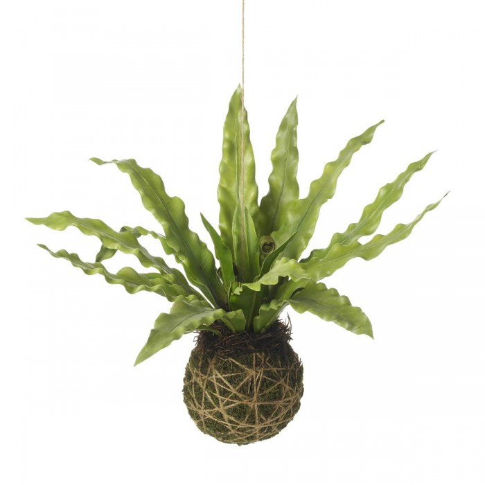 Asplenium Hanging Ball Green