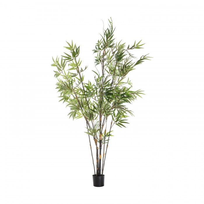 Bamboo with 859 Leaves