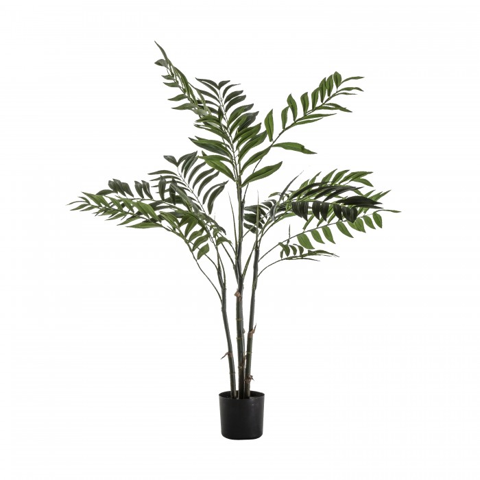 Areca Palm Tree Small